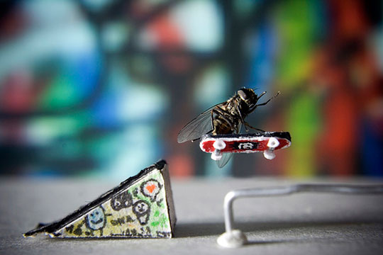 TheSecretLifeofMr.Fly1