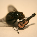 TheSecretLifeofMr.Fly7