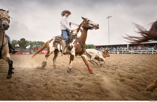 007_Rodeo_Horse_8816